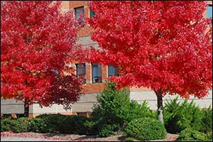 commercial landscaping cambridge